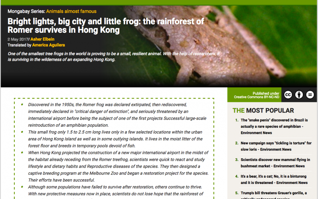 Bright lights, big city and little frog: the rainforest of Romer survives in Hong Kong