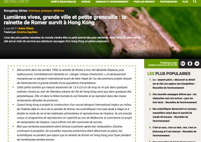 Lumières vives, grande ville et petite grenouille : la rainette de Romer survit à Hong Kong