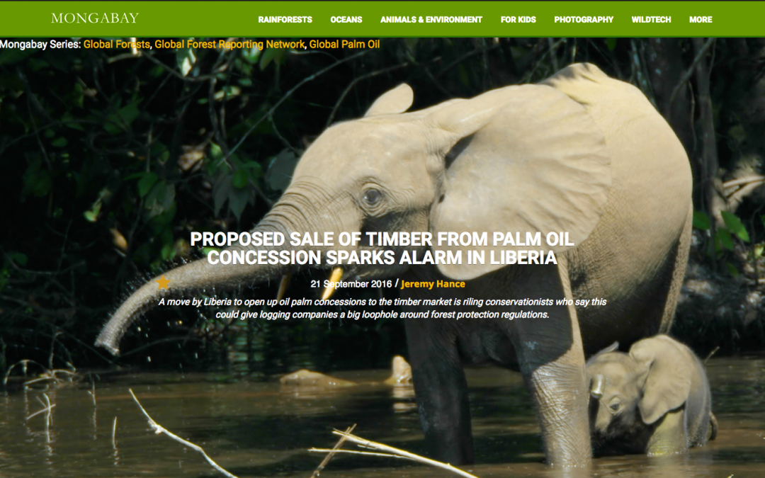 Proposed Sale of Timber from Palm Oil Concession Sparks Alarm in Liberia